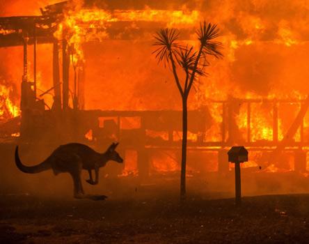 سوختن جنگل های استرالیا